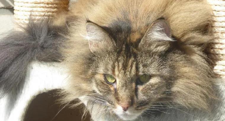 Katzensitter-Nachbarschaftshilfe